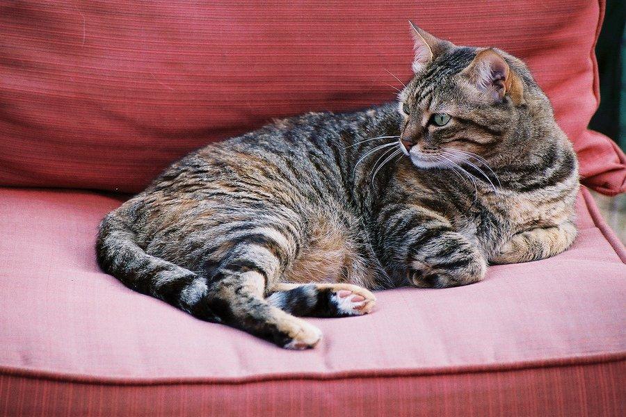полосатые коты фото