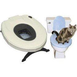 Кошка на унитазе. Как приучить животное?