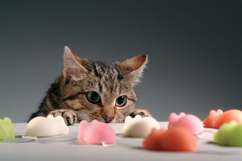 лекарство для кошек от насморка