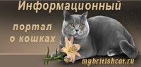 Информационный портал о кошках