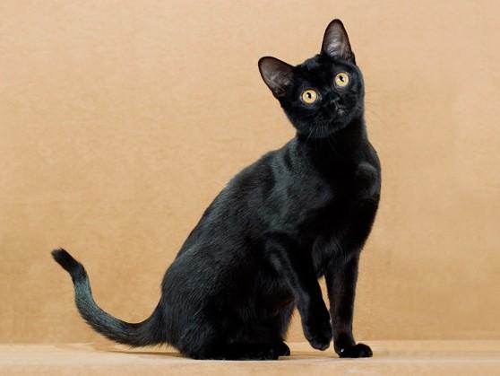 Главная  Фотогалерея  Кошки коты и котята