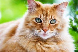Игривость кошек