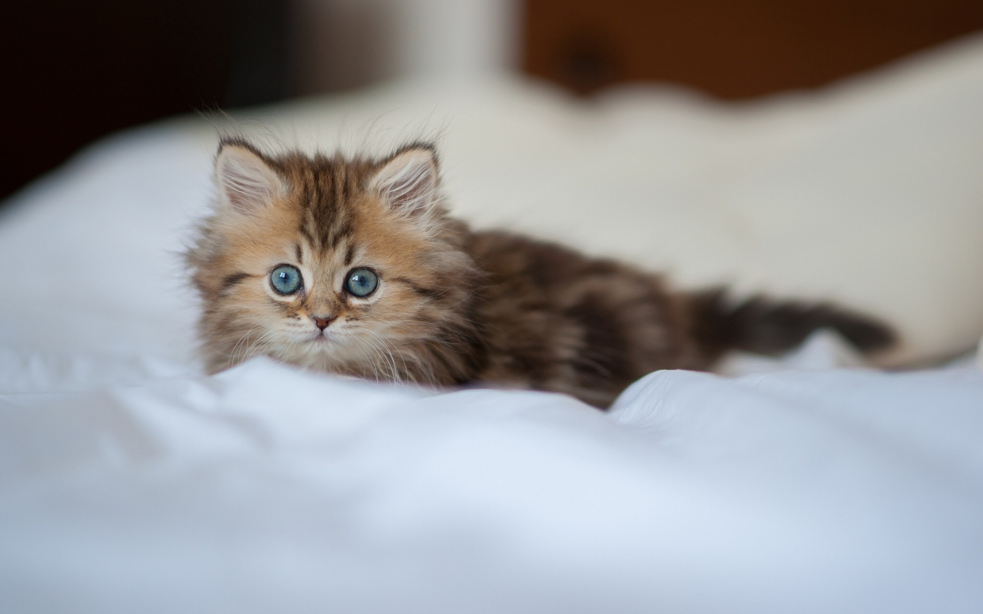 Галерея кошек
