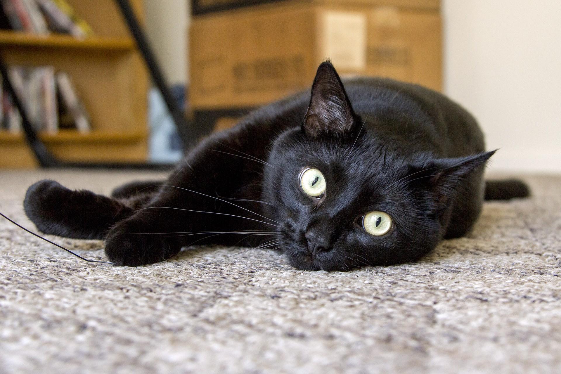 несет черная кошка в доме фото станции адмиралтейская
