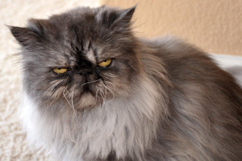 средней полосе коты экстремалы фото металл
