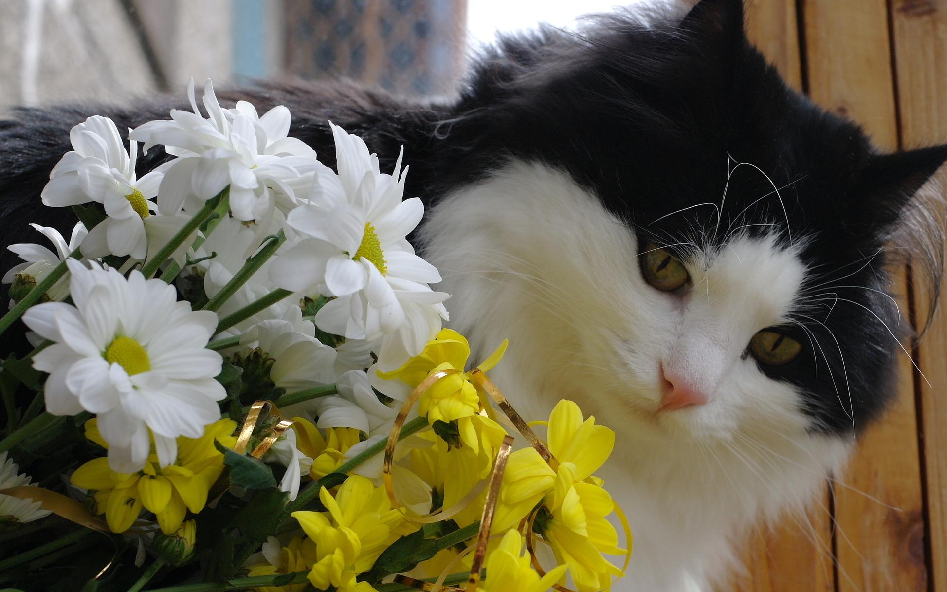 картинка красивой белой кошки в цветах вариант