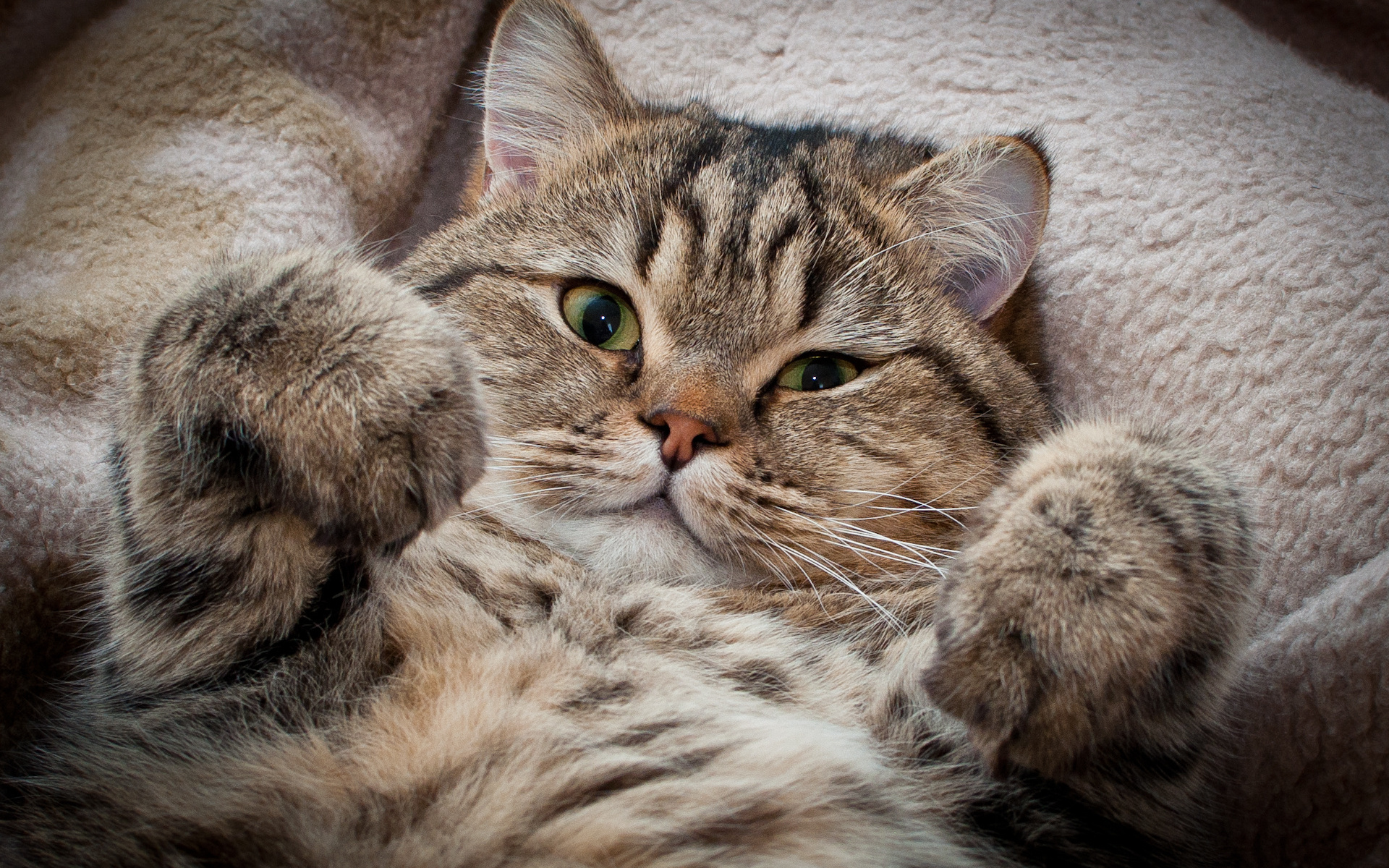картинки кошек на телефоны опасность кхумбу