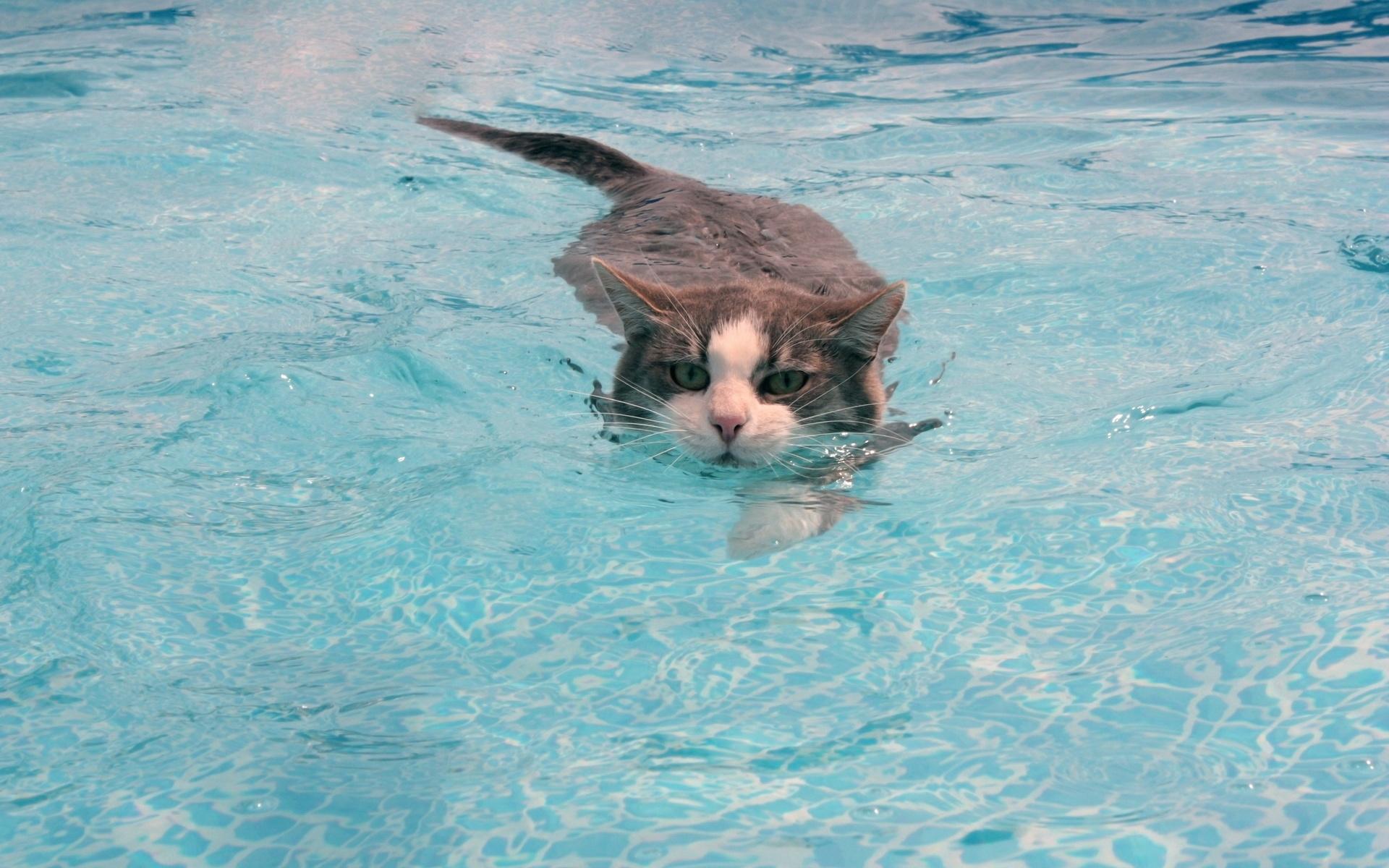 картинки любят купаться все дома, дачи