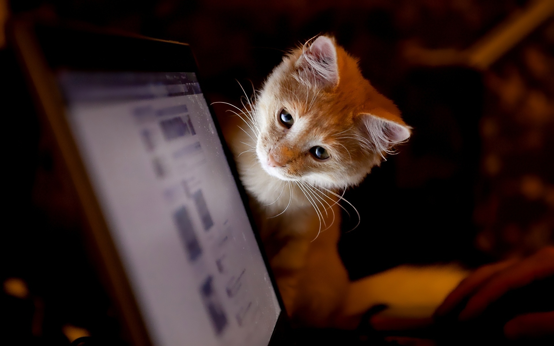 Смотреть картинки в вконтакте