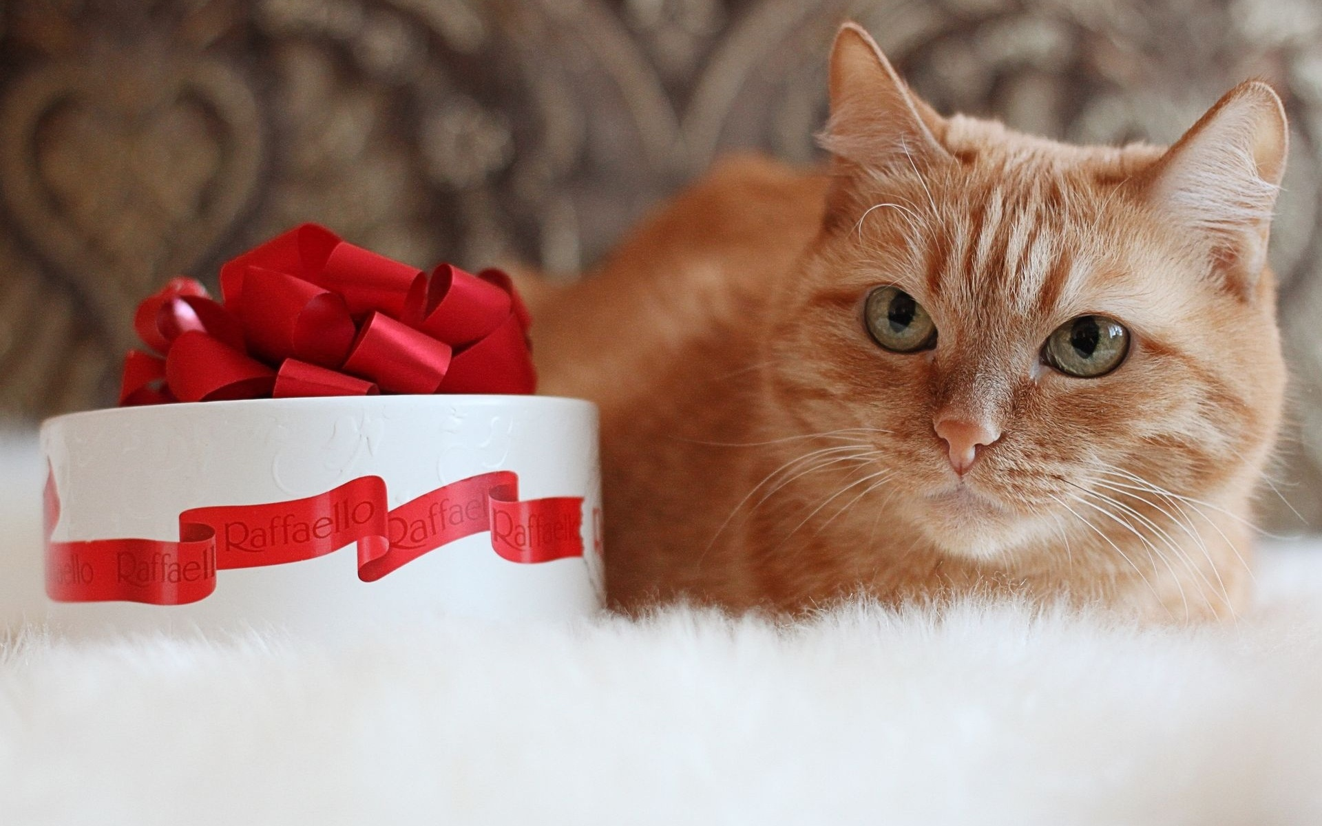 Фото с днем рождения и котиками