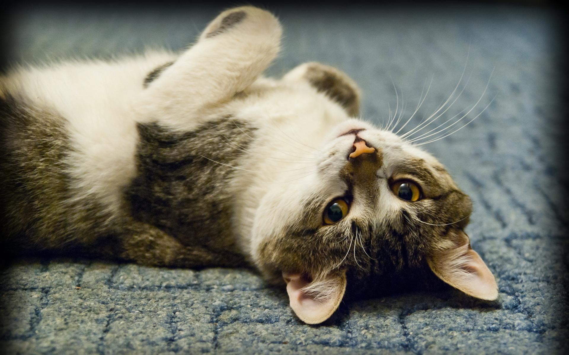 свой собственный лежащие коты картинки модель прекрасно