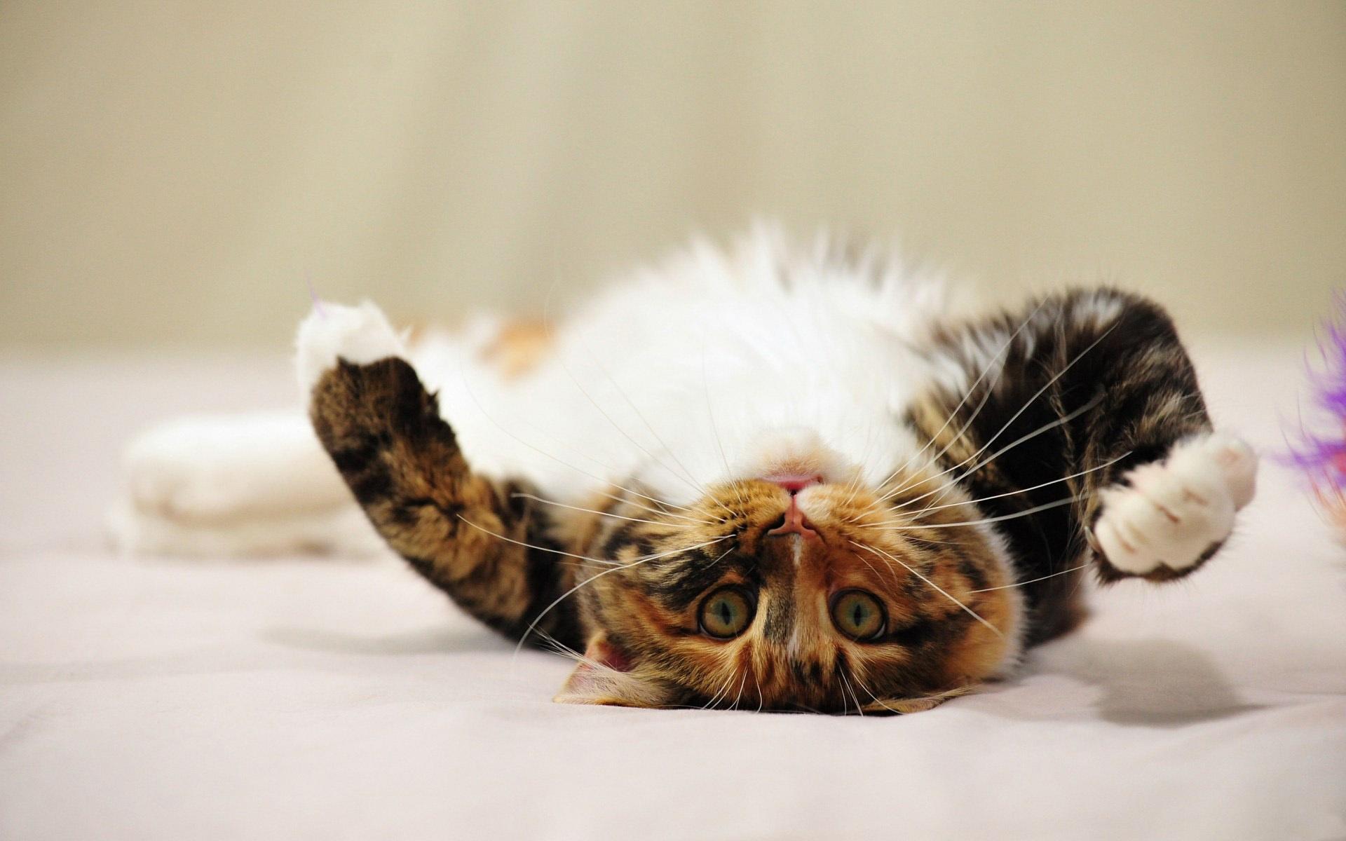 валяющиеся коты картинки надолго хватило, для