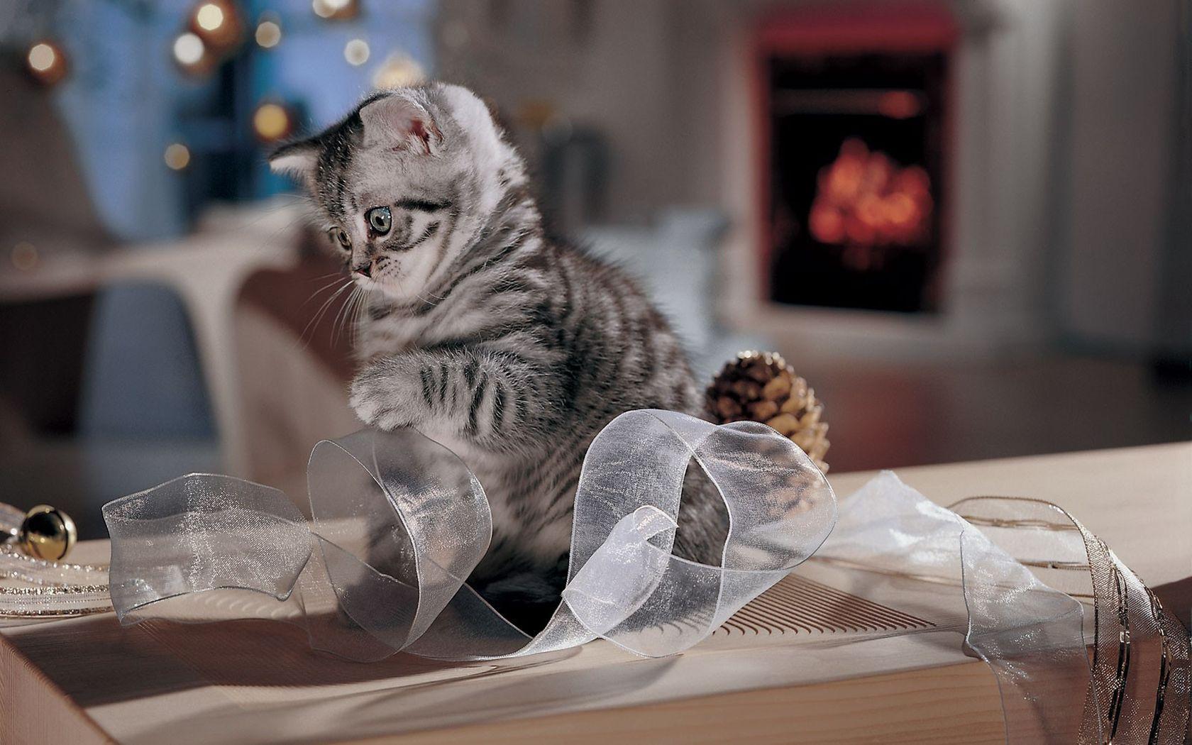 этого новые прикольные картинки котов хроническом