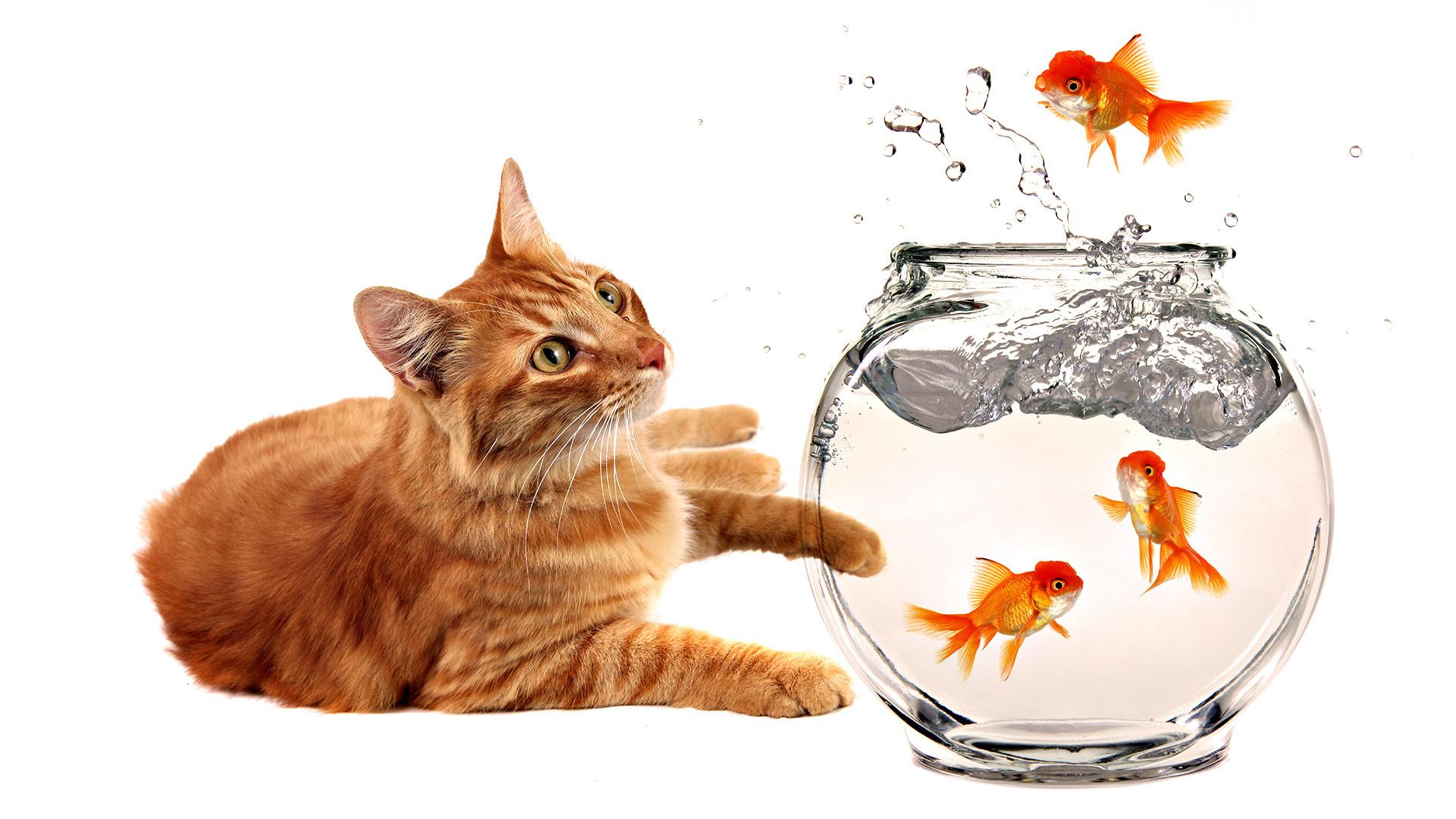 картинки кошек собак рыбок побывали