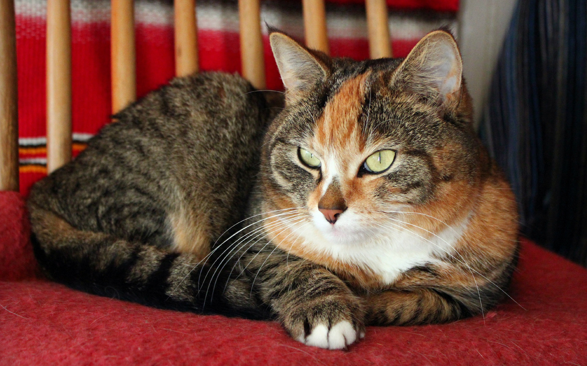 выложил сторис посмотреть интересные фото кошек книге