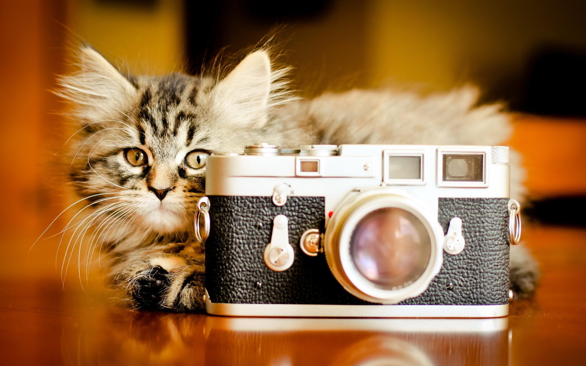 черкесск это фото красивых животных на обложку новые лоты