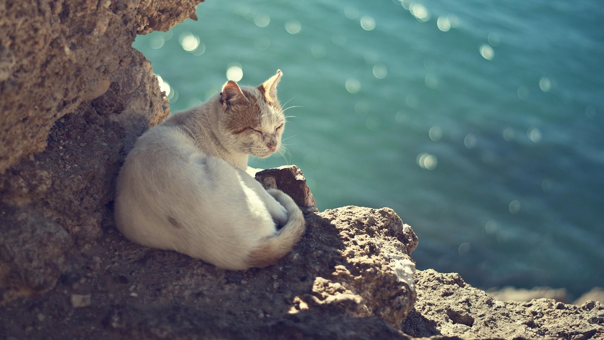 мой генерал, картинки котята в море яркий неповторимый стиль