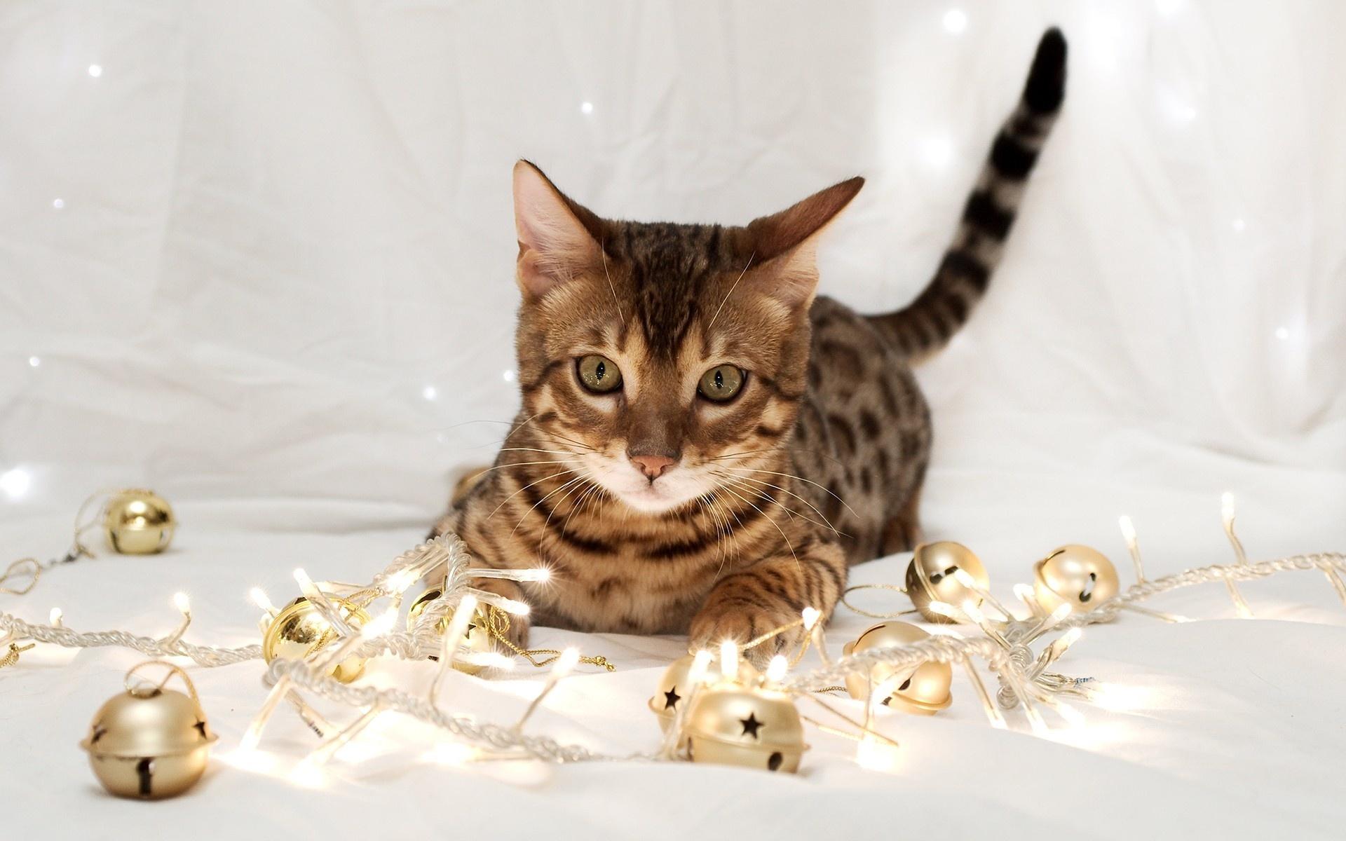 картинки котята новые ввела поэзию моду