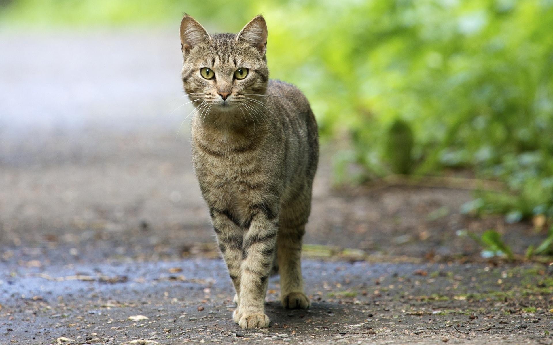 Фото коты картинки