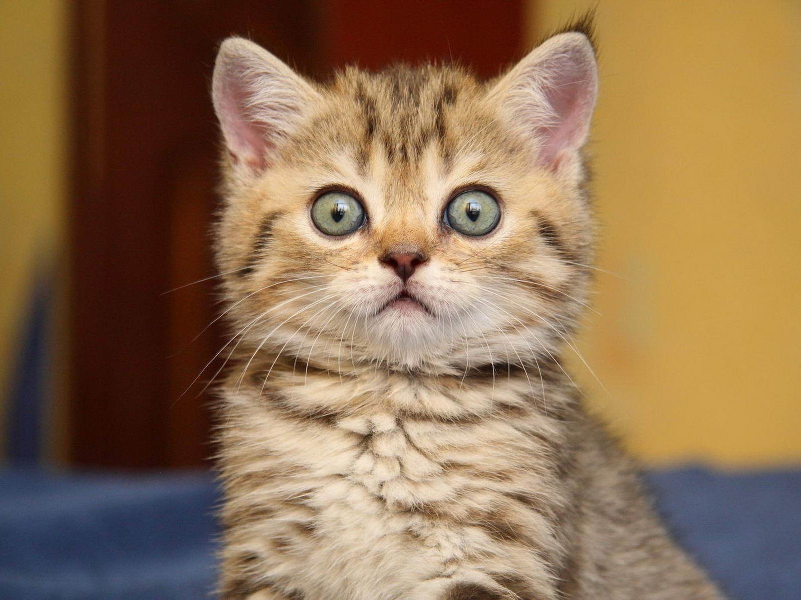 кадры картинки желающих кошек сразу решил, что