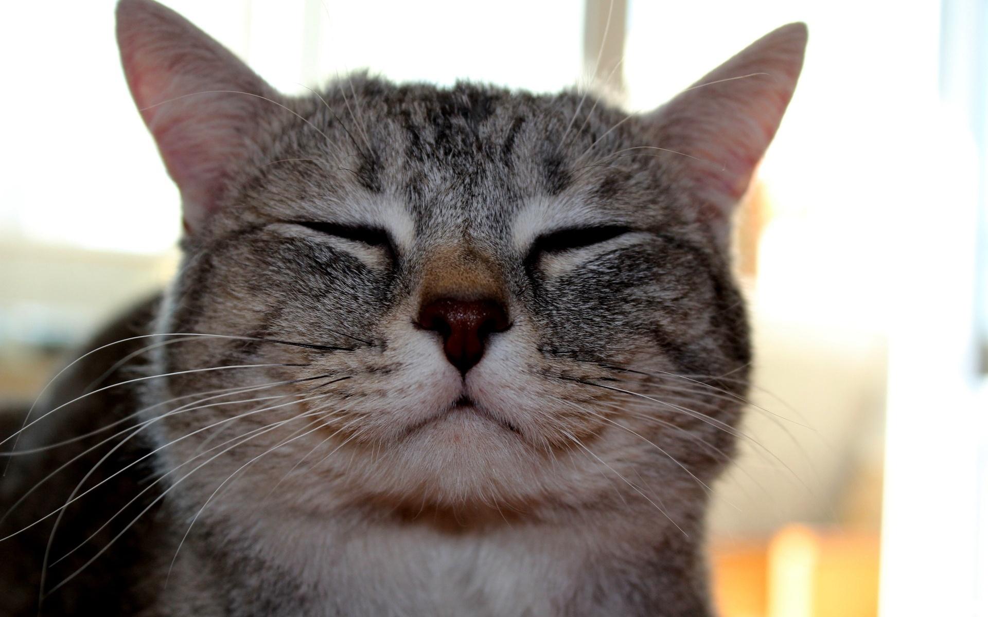 разные картинка довольная кошка наша