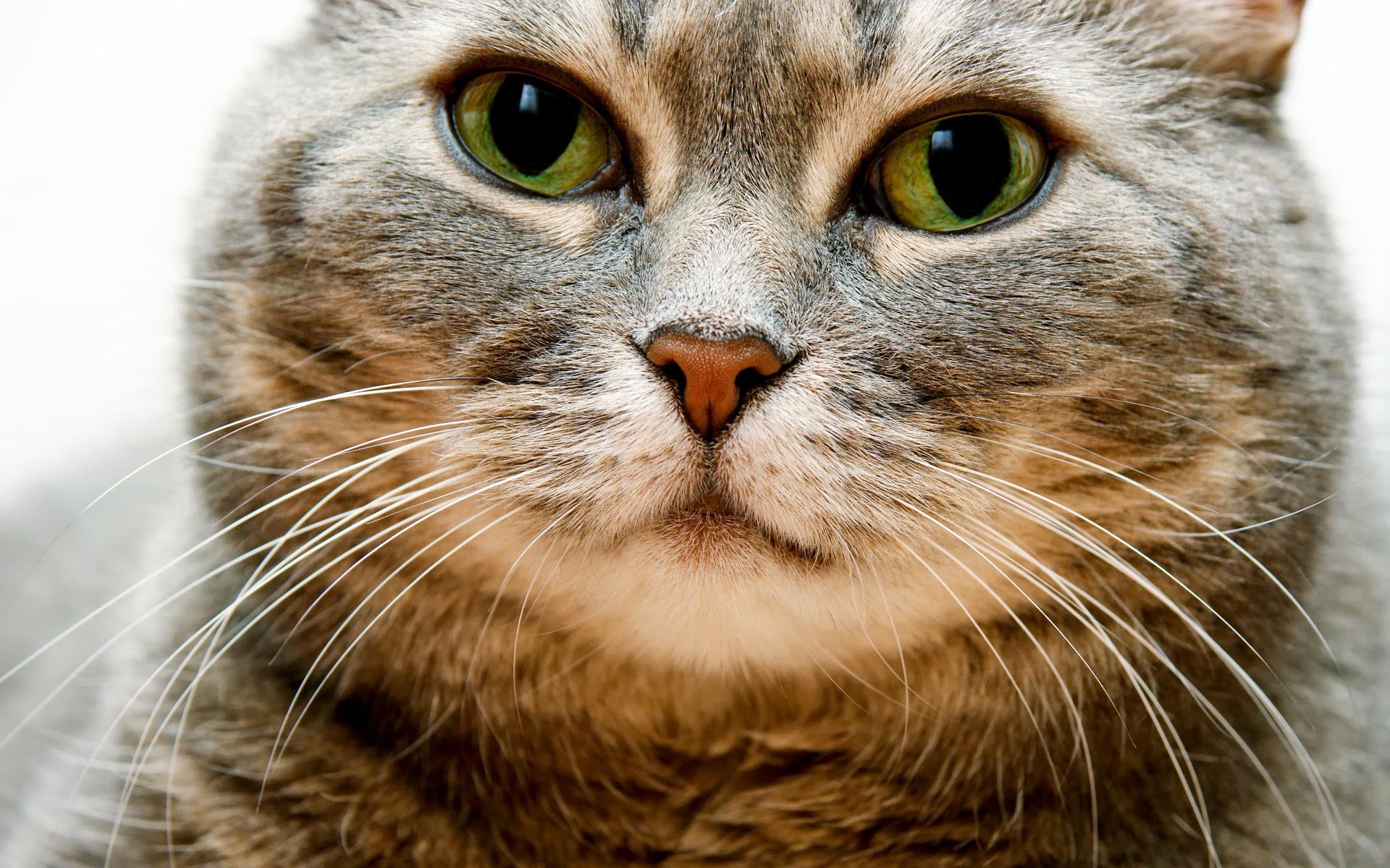 Картинки рожицы котов