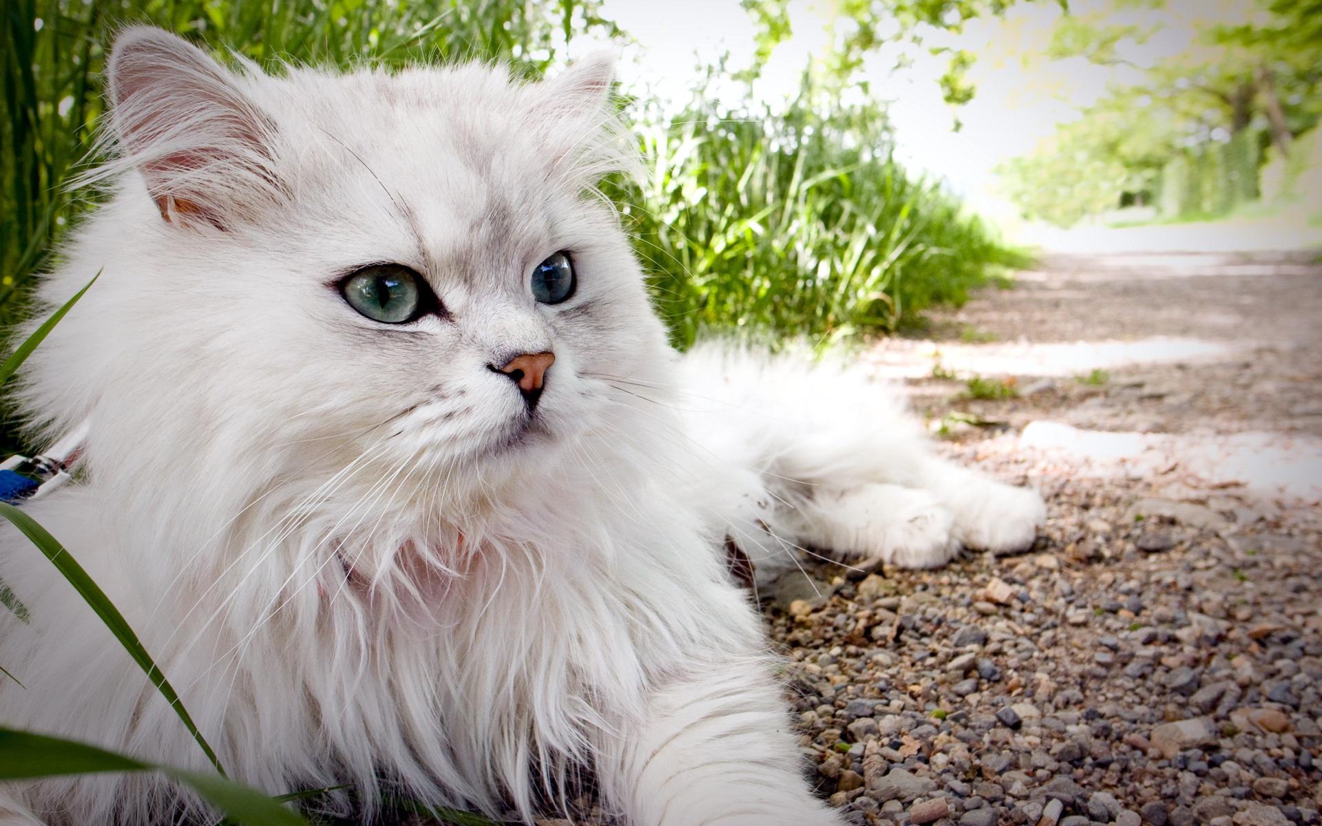 очень красивые фото кошек дадим