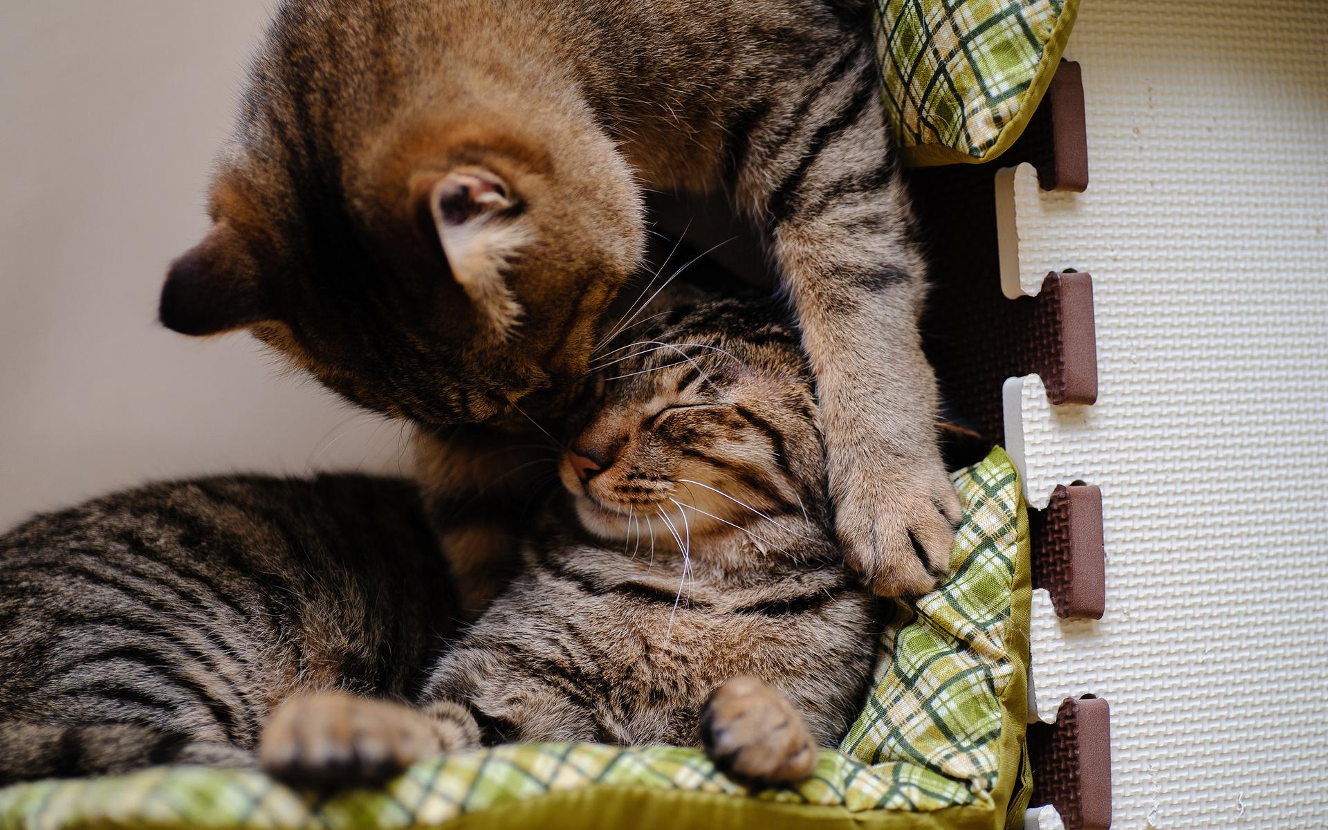 Картинки романтичных котов